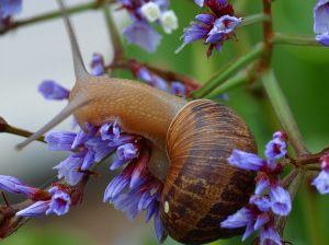 Just a snail